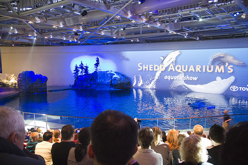 The Aquatic Show at the Shedd Aquarium.